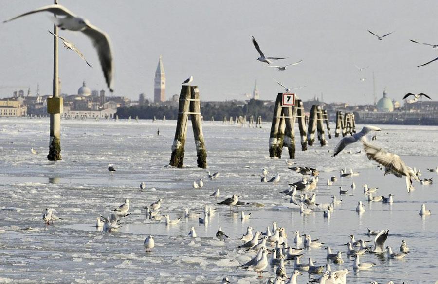 467751 Венецианские каналы впервые за 80 лет сковало льдом