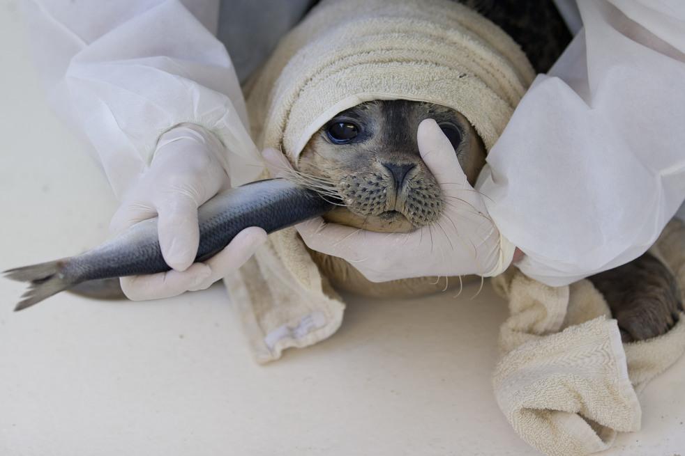 489 Детский дом для тюленей сирот в Голландии