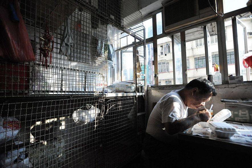 497 Жизнь в собачьих клетках в Гонконге