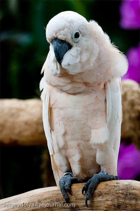 557 Сингапурский парк птиц