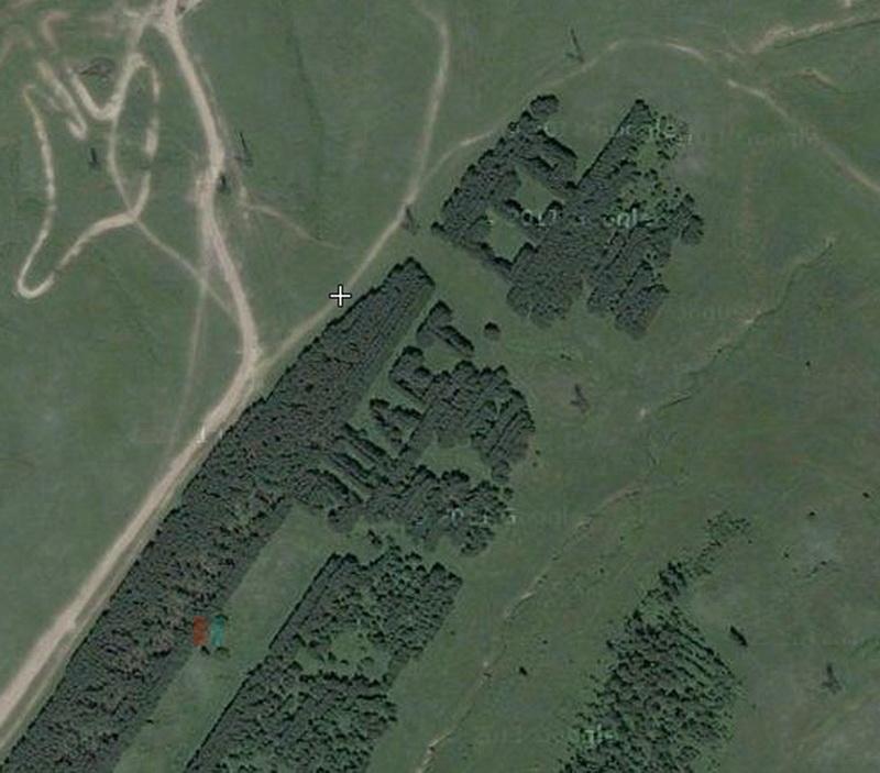 559 Надписи из деревьев в разных уголках бывшего СССР