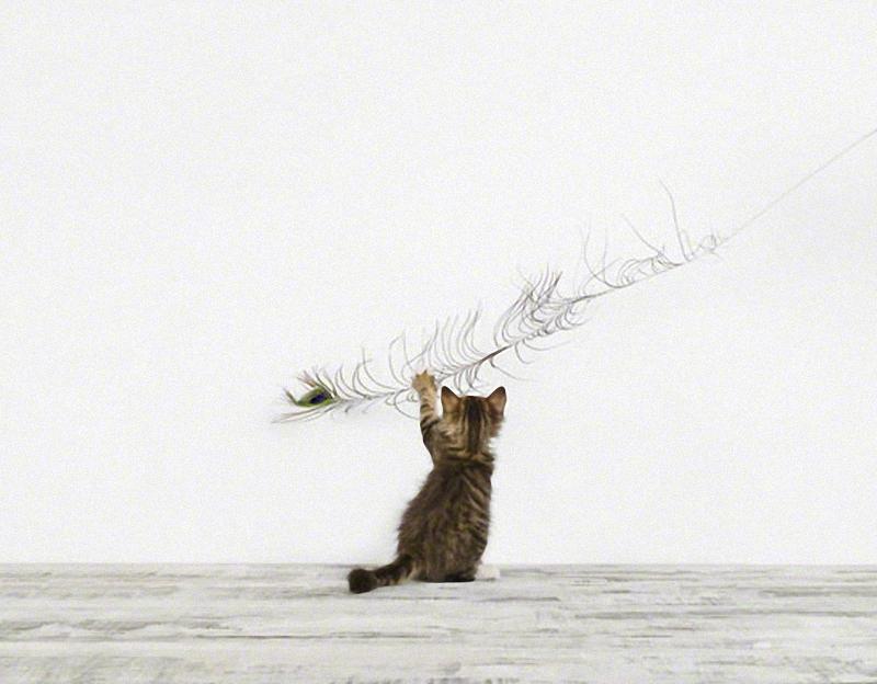 578 Малыши животных в фотографиях Шерон Монтроуз