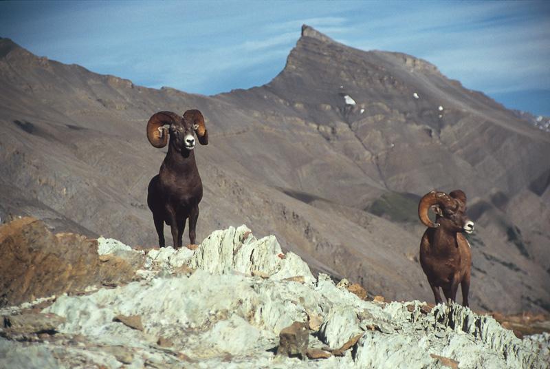 6124 Холодная красота Аляски от фотографа Рея Балсона