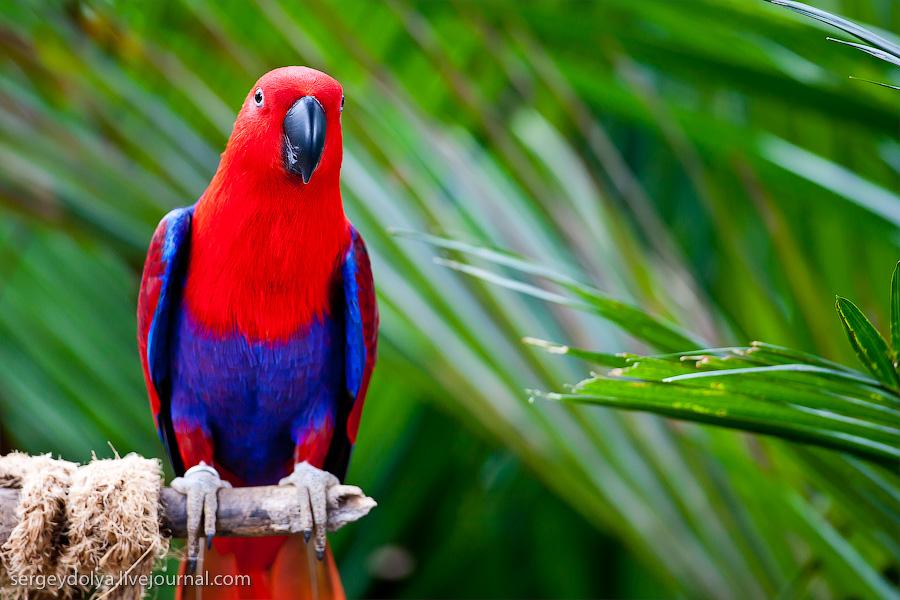 657 Сингапурский парк птиц