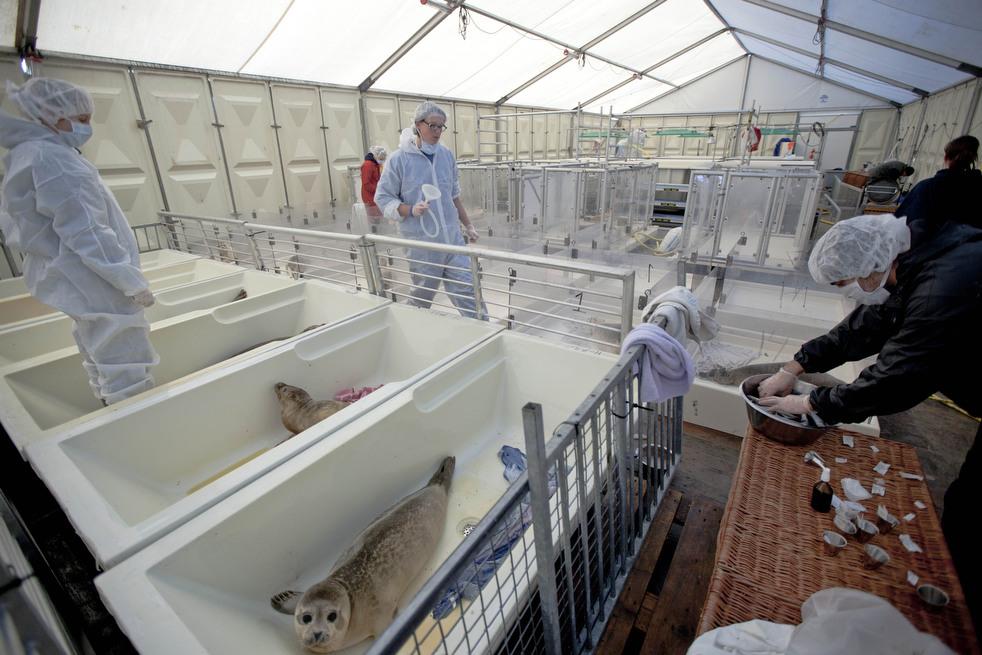 664 Детский дом для тюленей сирот в Голландии
