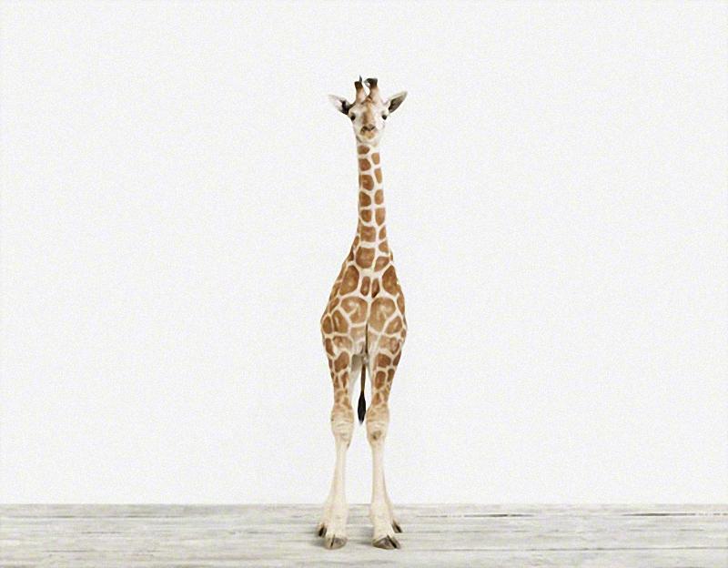 677 Малыши животных в фотографиях Шерон Монтроуз