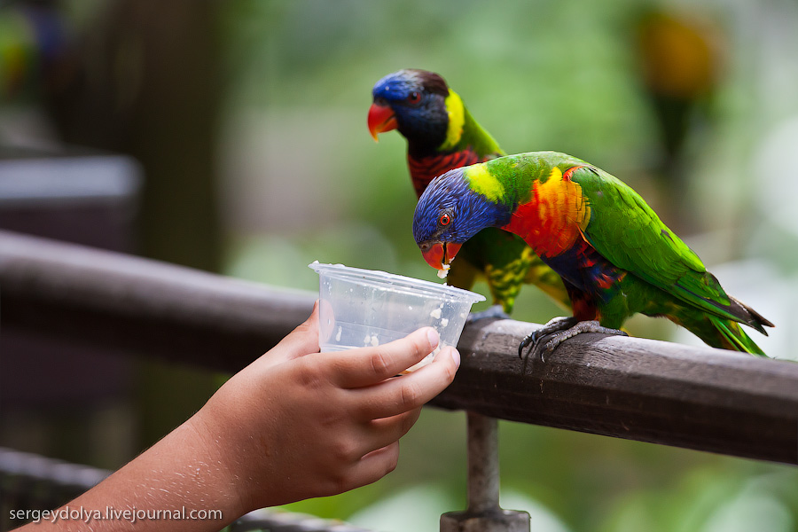 749 Сингапурский парк птиц