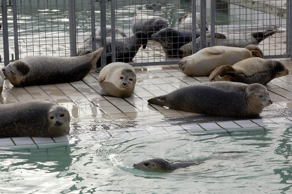 755 Детский дом для тюленей сирот в Голландии