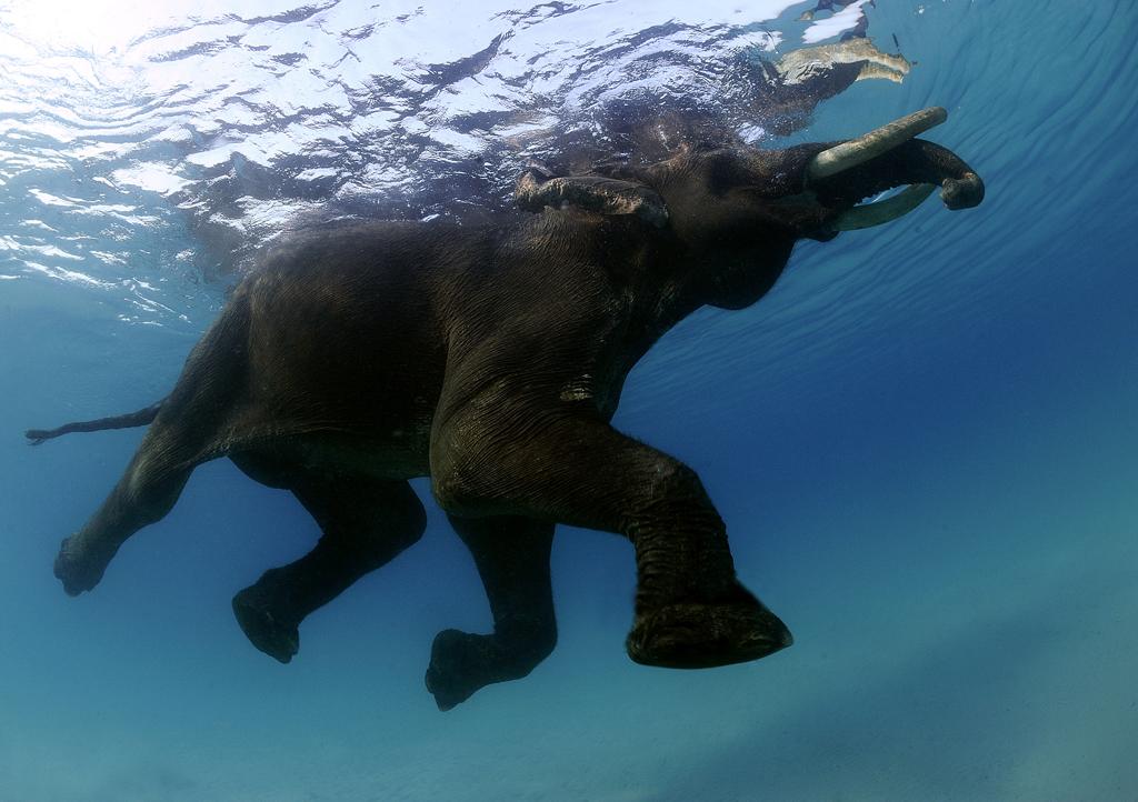 8123 Последний плавающий слон