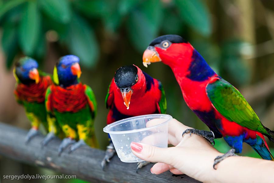 847 Сингапурский парк птиц