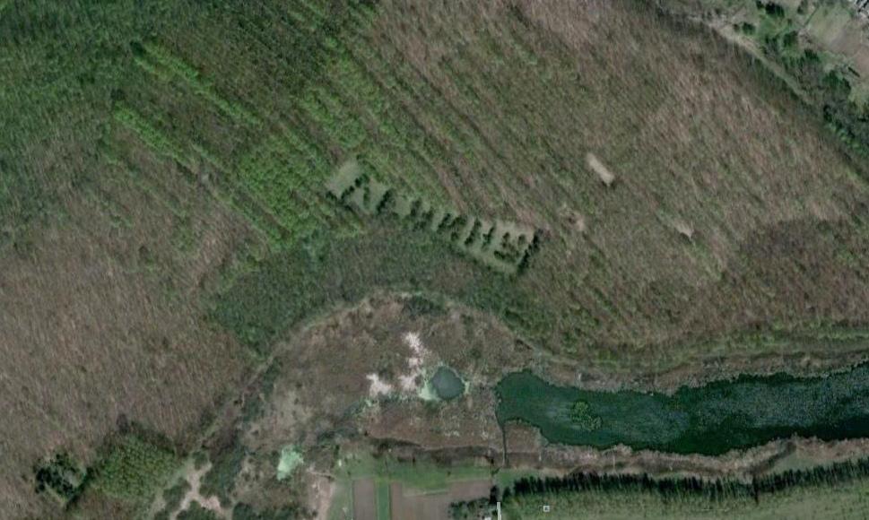 849 Надписи из деревьев в разных уголках бывшего СССР