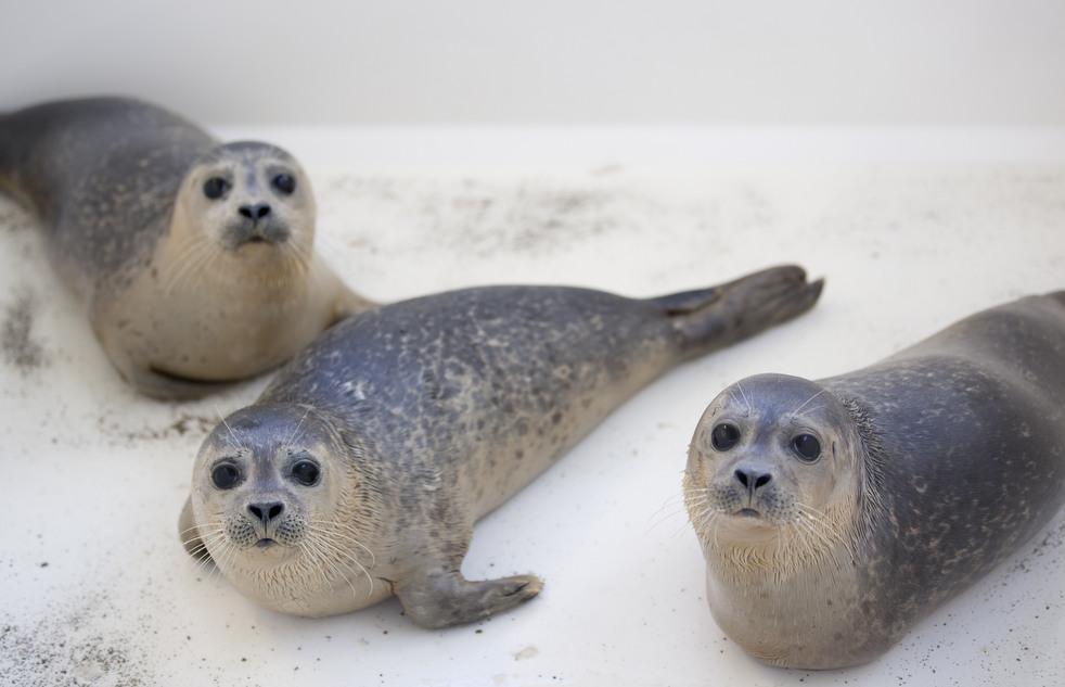 853 Детский дом для тюленей сирот в Голландии
