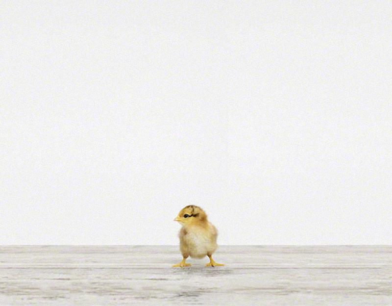 865 Малыши животных в фотографиях Шерон Монтроуз