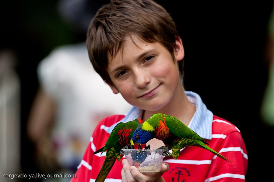 940 Сингапурский парк птиц