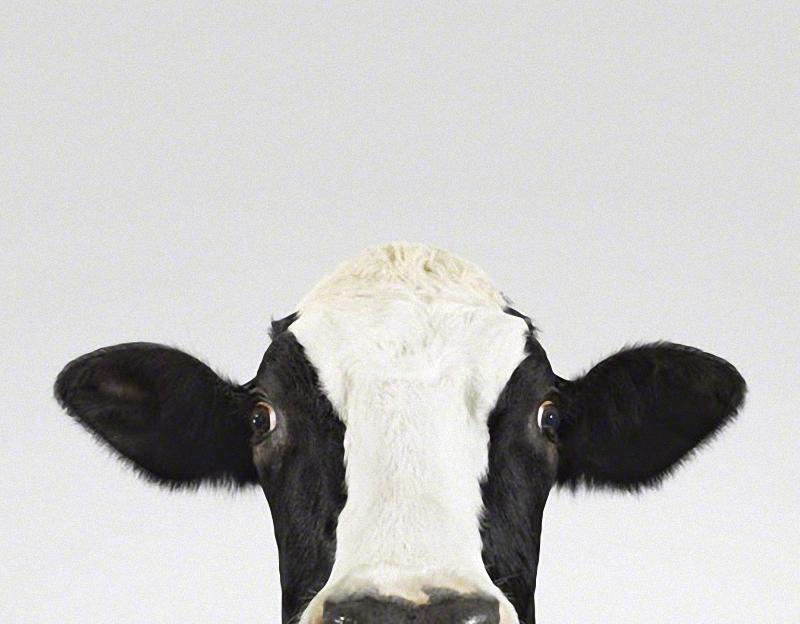 956 Малыши животных в фотографиях Шерон Монтроуз
