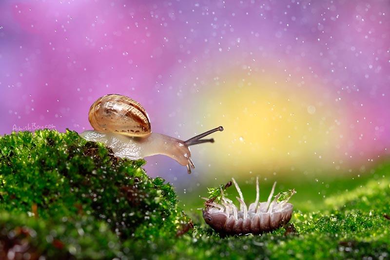 BIGPIC17 Удивительная макрофотография: неожиданно гламурные насекомые и многое другое