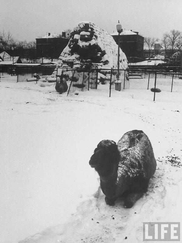 Moscow 23 Москва зимой 1959 года