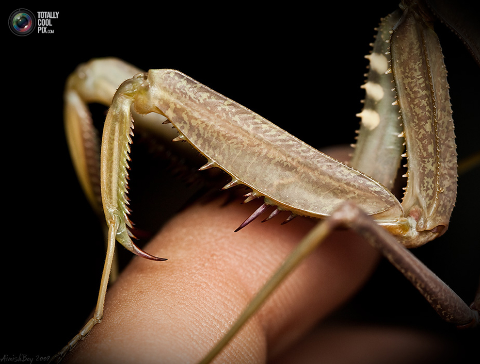 aimishboy 010 Удивительная макрофотография: неожиданно гламурные насекомые и многое другое