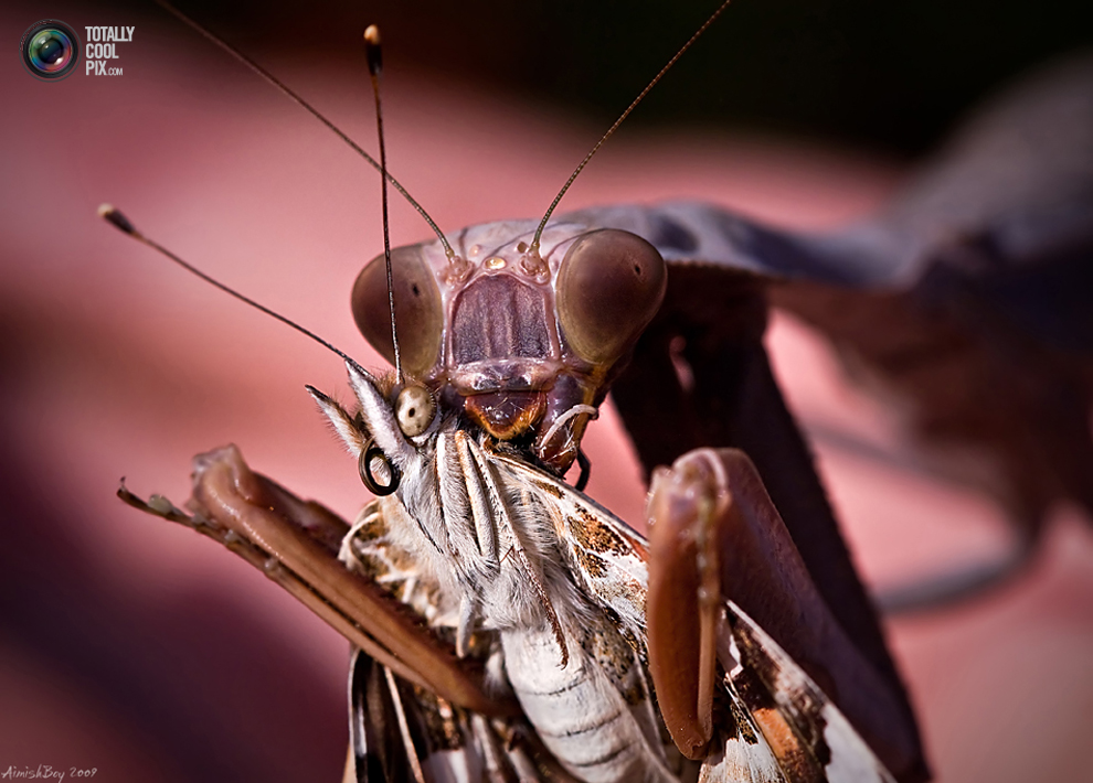 aimishboy 011 Удивительная макрофотография: неожиданно гламурные насекомые и многое другое
