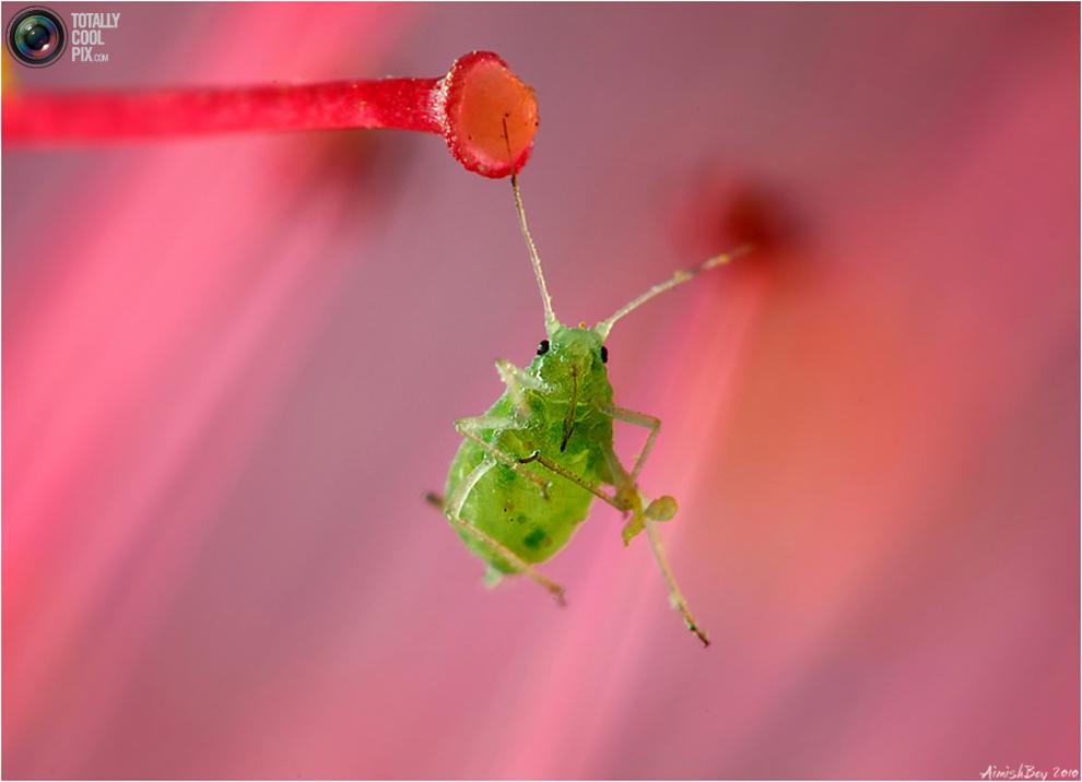 aimishboy 012 Удивительная макрофотография: неожиданно гламурные насекомые и многое другое