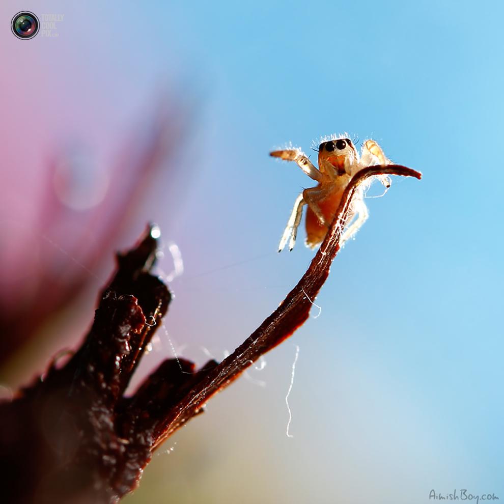 aimishboy 013 Удивительная макрофотография: неожиданно гламурные насекомые и многое другое