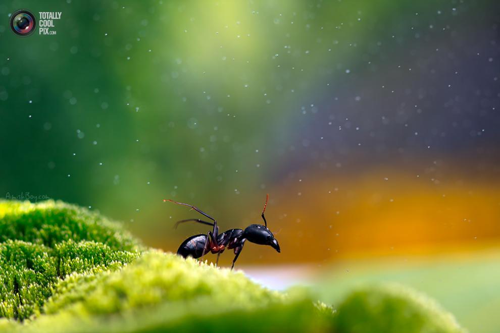 aimishboy 017 Удивительная макрофотография: неожиданно гламурные насекомые и многое другое