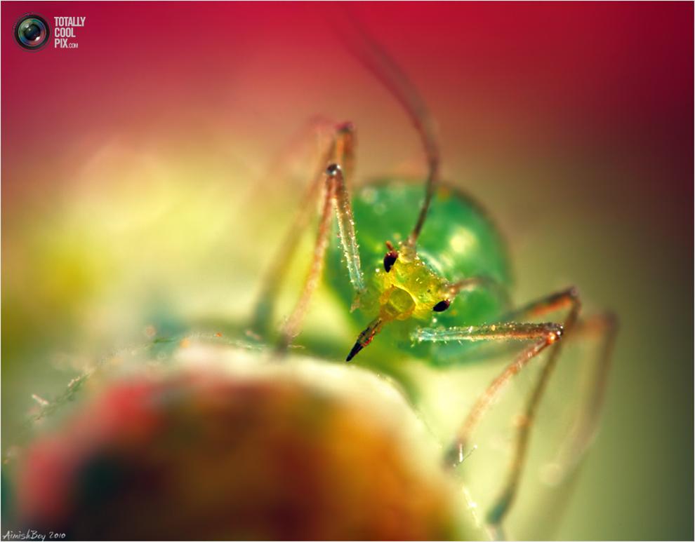 aimishboy 018 Удивительная макрофотография: неожиданно гламурные насекомые и многое другое