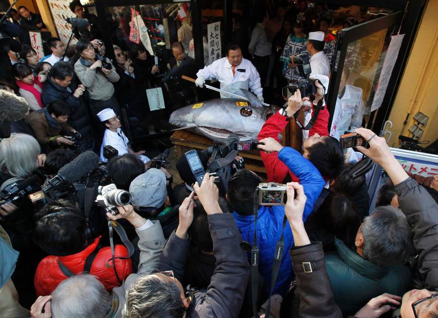 image 300542 galleryV9 evor В Японии разделали гигантского тунца за 736 тысяч долларов