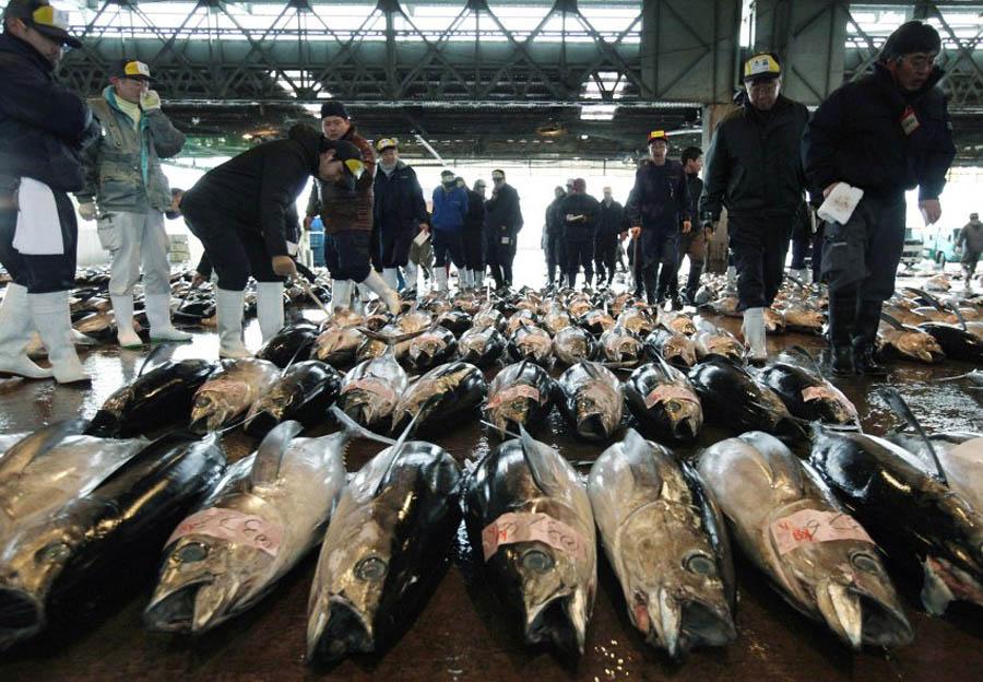 image 300543 galleryV9 fzwg В Японии разделали гигантского тунца за 736 тысяч долларов