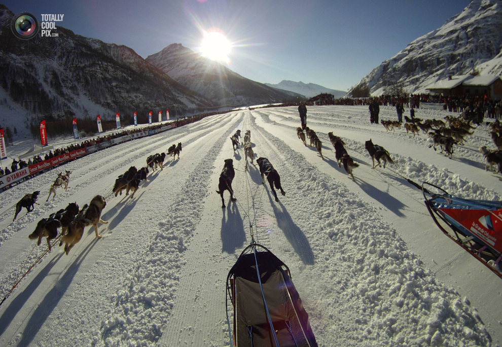 lagrande 019 Гонки на собачьих упряжках La Grande Odyssee