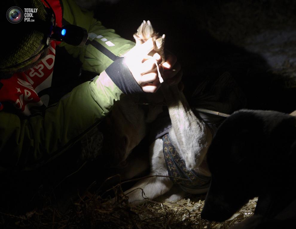 lagrande 023 Гонки на собачьих упряжках La Grande Odyssee
