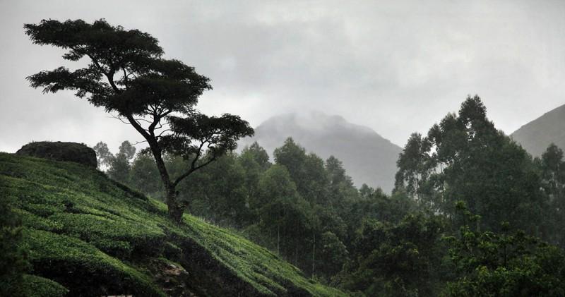 0105 800x421 Шум дождя. Фотограф Кристоф Жакро