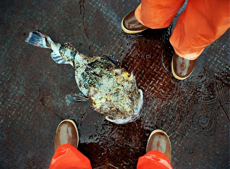 01519 Кори Арнолд. Добыча краба, трески и палтуса в Беринговом море