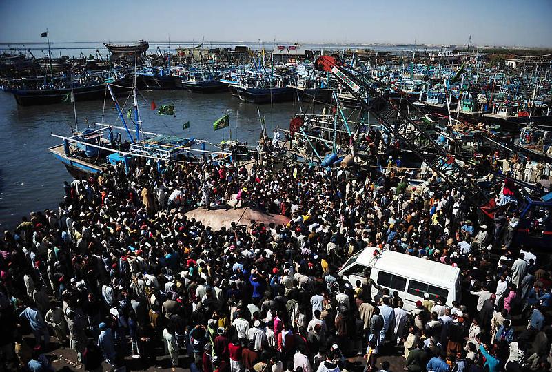 0207128 Мертвую китовую акулу, найденную у побережья Пакистана, продали за $19 тыс.