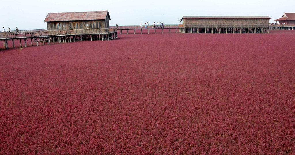 0 72d51 ab1a2da5 orig Красный пляж в Китае