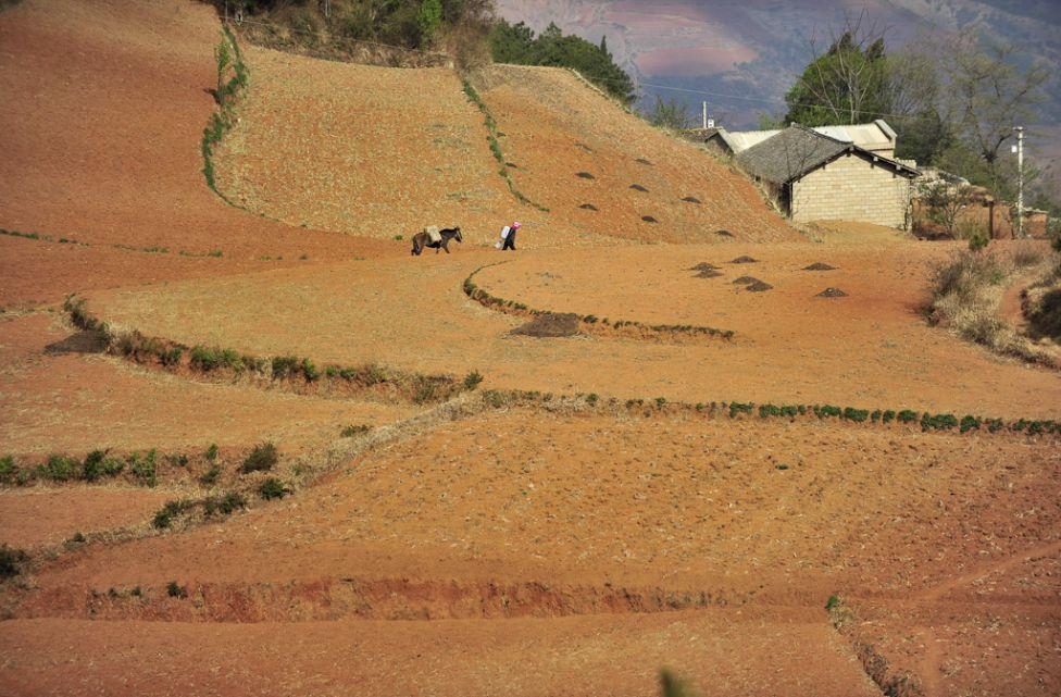 10145 Рисовые поля снизу и сверху