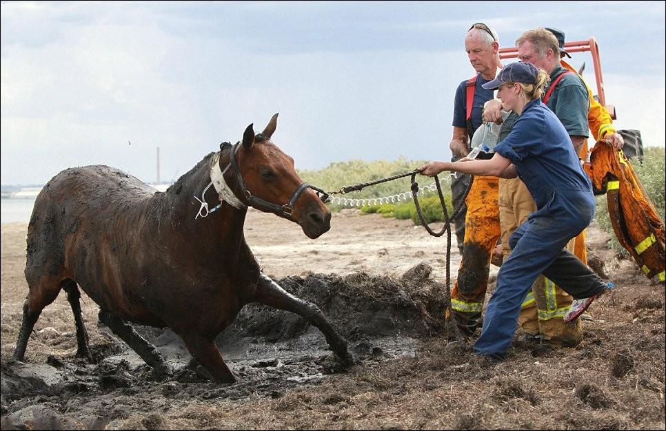 10155 Драма на пляже: Спасение лошади
