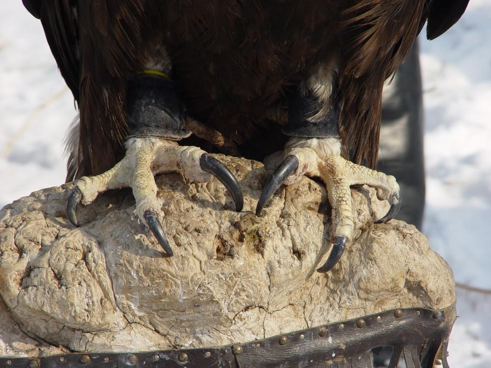 11117 Фоторепортаж с соревнований по охоте с ловчими птицами