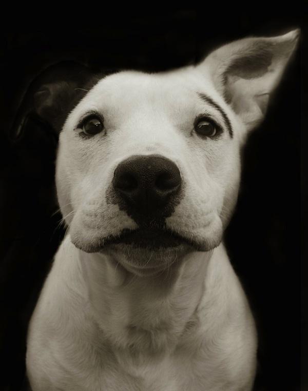 1184 Портреты собак из приютов
