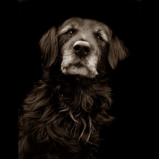 1185 Портреты собак из приютов