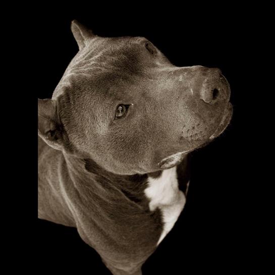 1252 Портреты собак из приютов