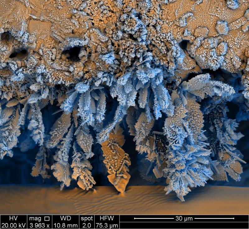 1254 Фотографии, сделанные с помощью электронного микроскопа