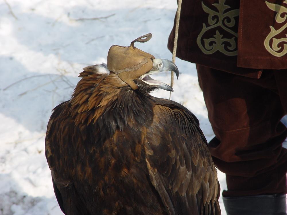 1282 Фоторепортаж с соревнований по охоте с ловчими птицами