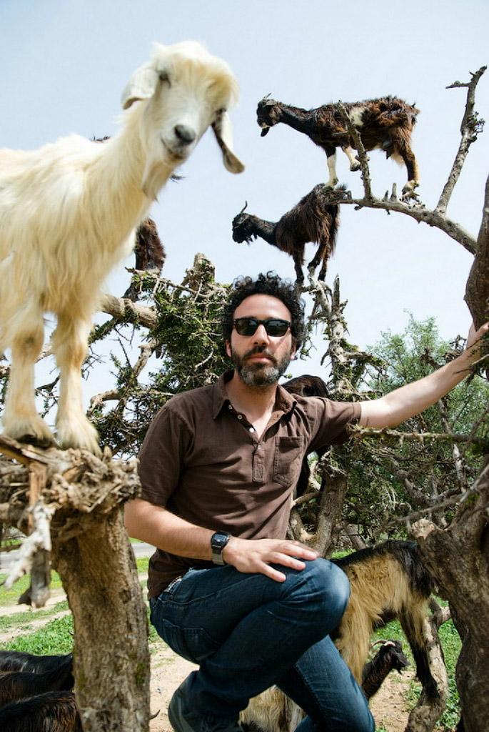 13111 Козы на деревьях в Марокко