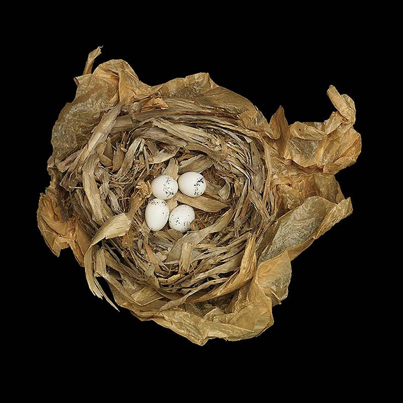 1343 Шедевры природной архитектуры   птичьи гнезда