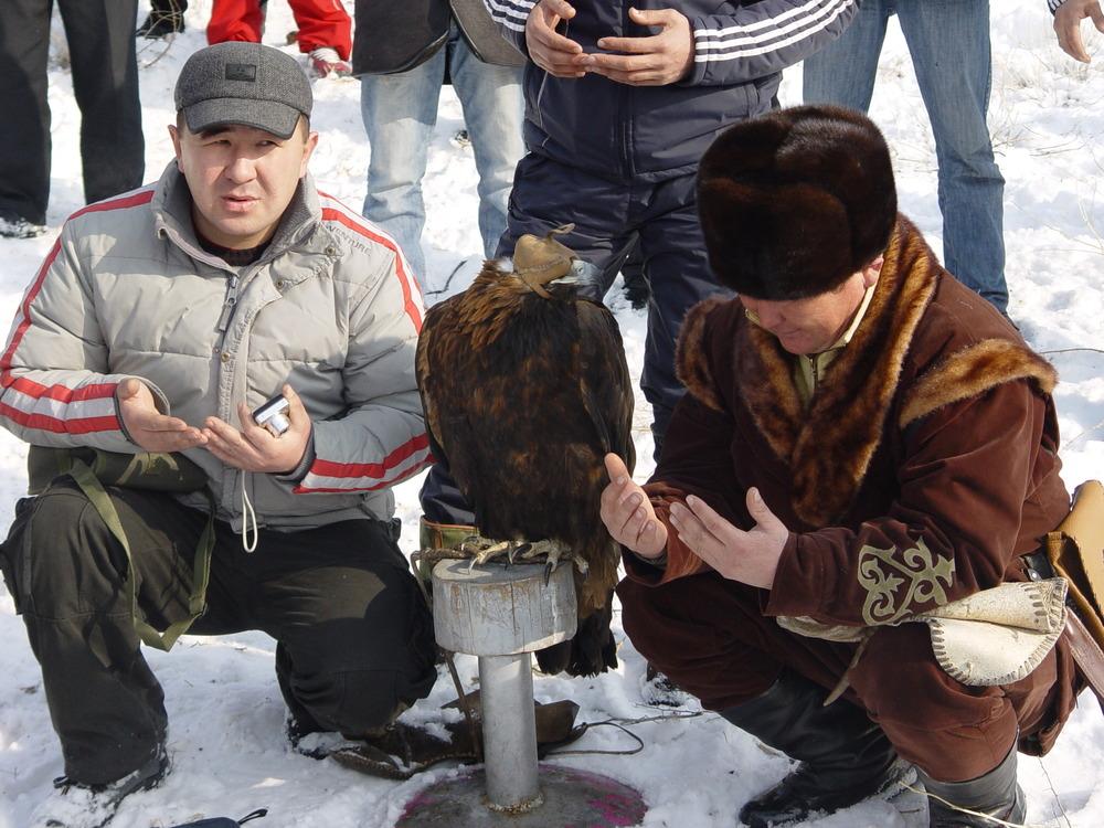 1372 Фоторепортаж с соревнований по охоте с ловчими птицами