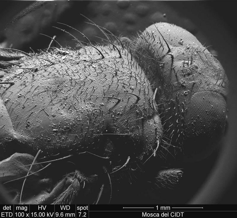 1450 Фотографии, сделанные с помощью электронного микроскопа