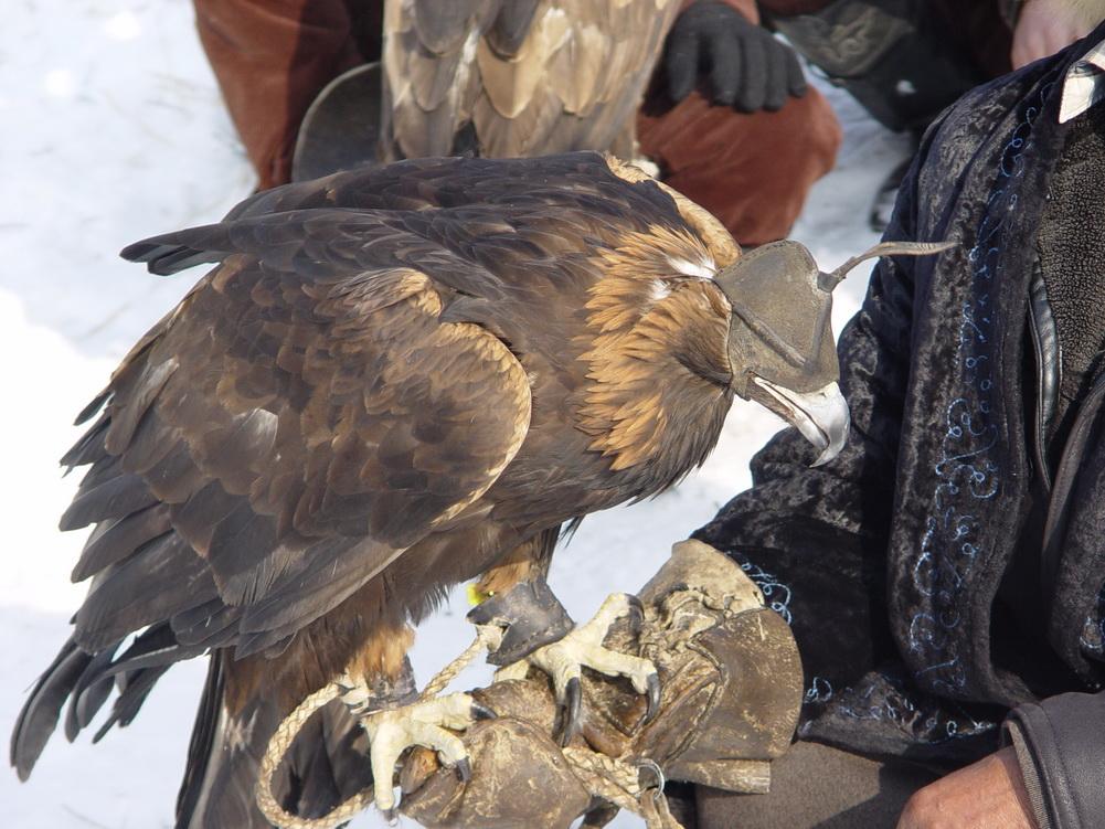 1567 Фоторепортаж с соревнований по охоте с ловчими птицами