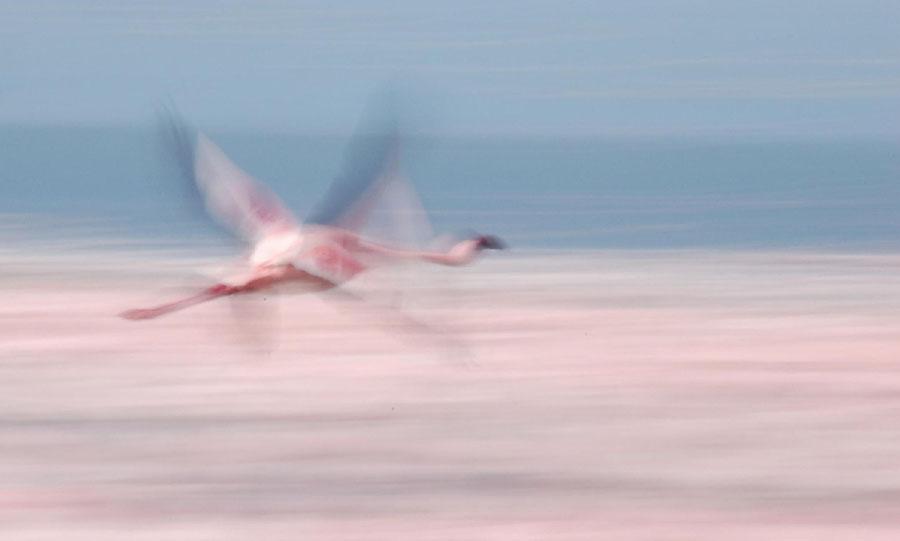 168277659 a68daa75b2 b Миллионы розовых фламинго