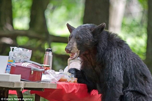 1706 Вас не приглашали   медведь заявился на семейный пикник